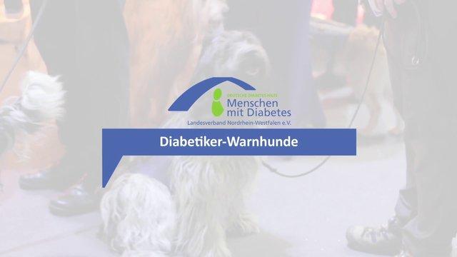 Diabetiker-Warnhunde